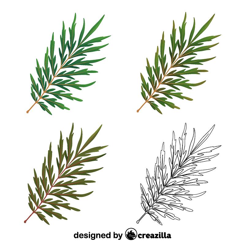 Silky oak leaves vector