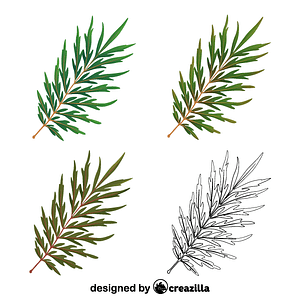 Silky oak leaves vector
