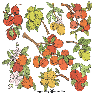 Set of Apple tree vector