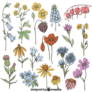 Set of Wild flower vector