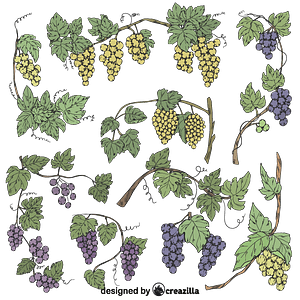 Set of Grapevine vector