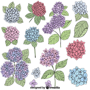 Set of Hydrangea vector