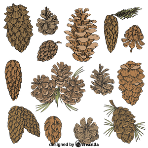 Set of Pine cone vector