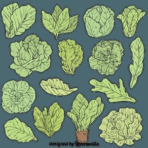 Set of Salad vector