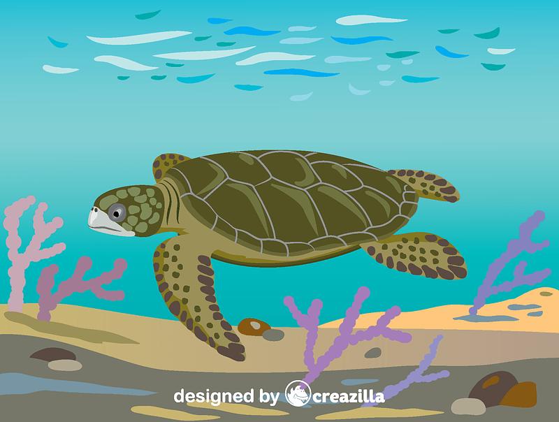 Flatback sea turtle vector