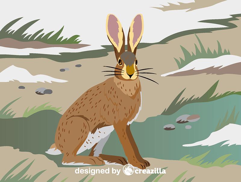 Hispid hare vector