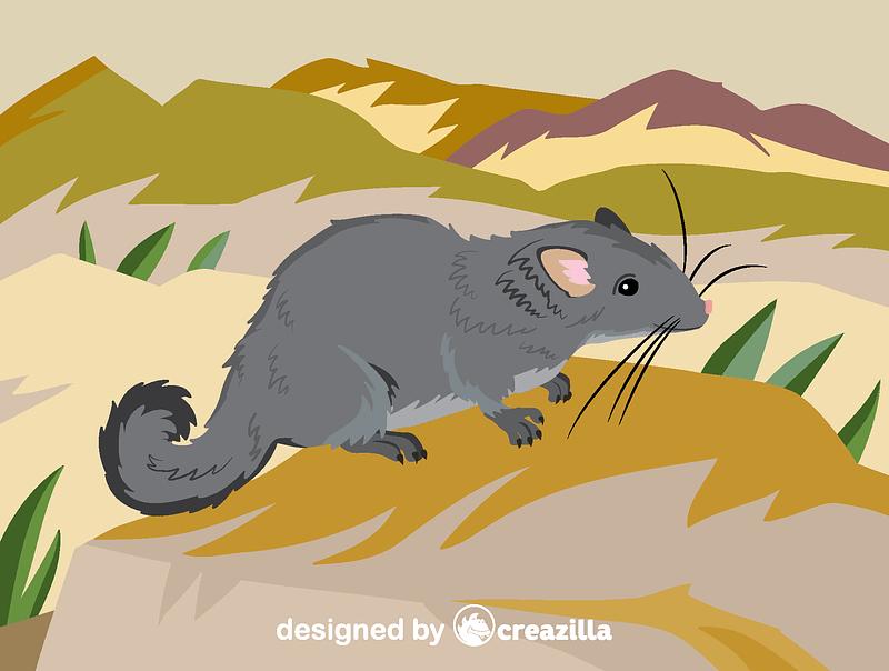 Laotian rock rat vector