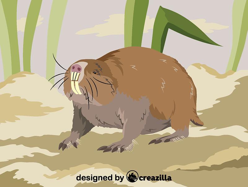 Damaraland mole-rat vector