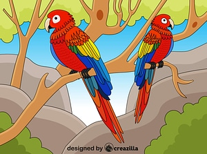 Macaw vector