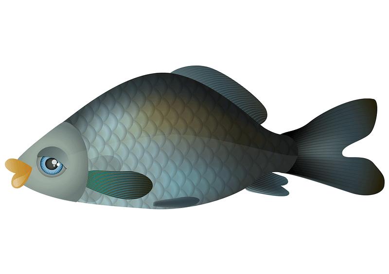 Cartoon Carp Fish vector