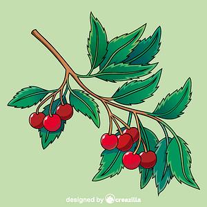 Vector de Cherry