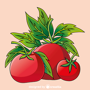 Tomato vector