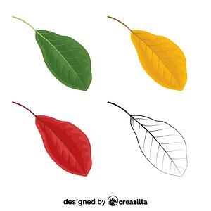 Black tupelo leaves vector