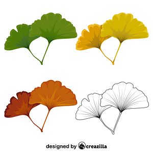 Maidenhair tree leaf vector