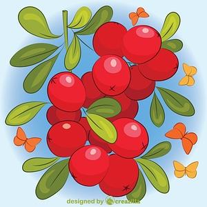 Cranberry vector