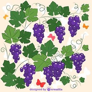 Grapevine vector
