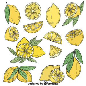 Set of lemon vector