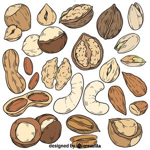 Set of nut vector