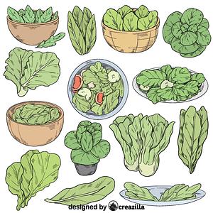 Set of lettuce vector