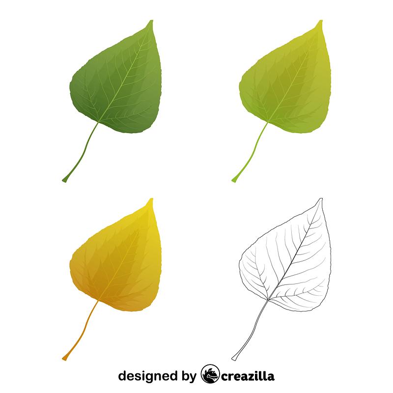 Balsam poplar leaves vector