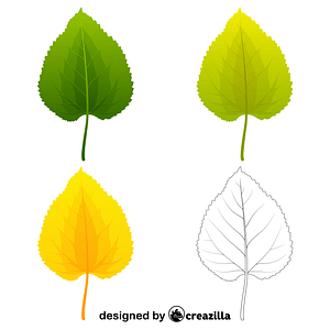Black mulberry leaves vector