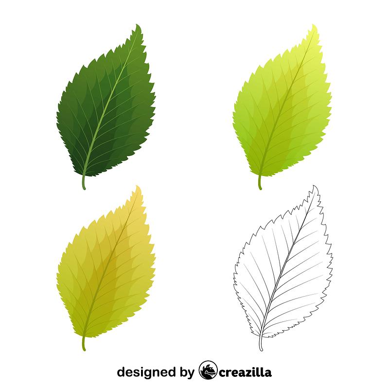 Dutch elm leaves vector