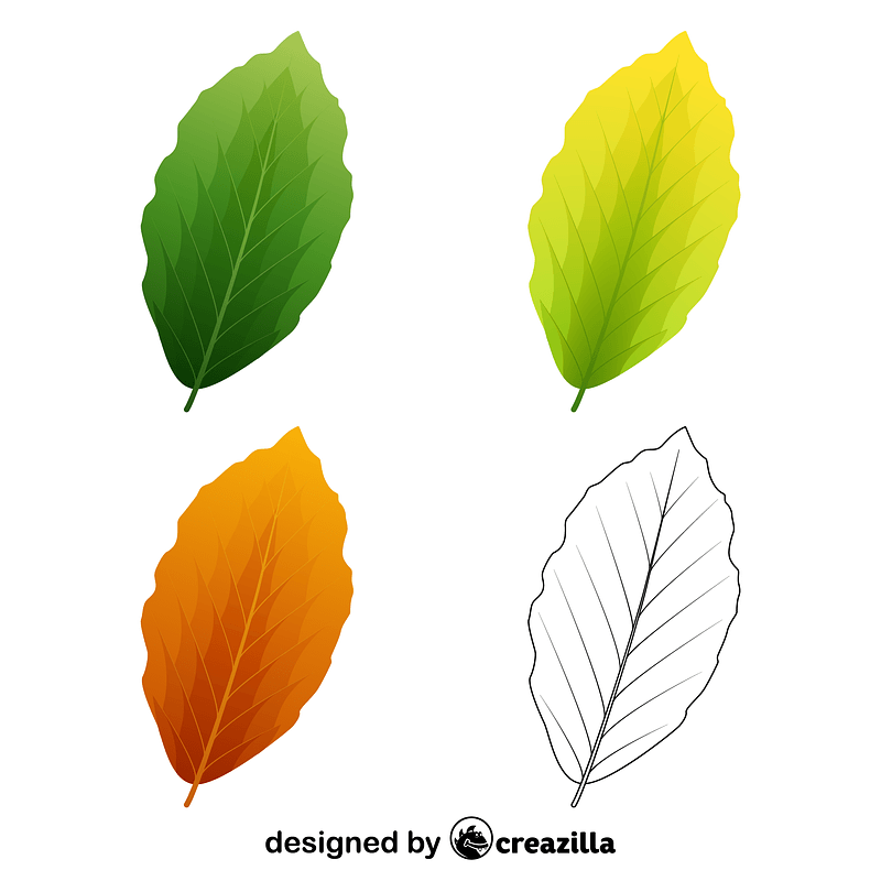 European beech leaves vector