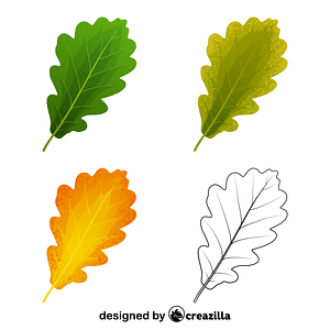 Sessile oak leaves vector
