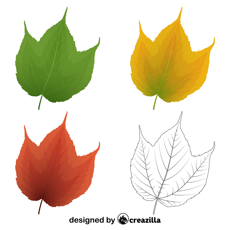 Striped maple leaves vector