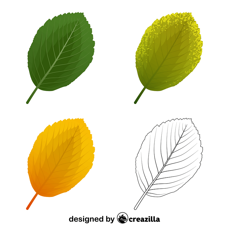 Whitebeam leaves vector