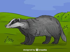 European badger vector