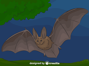 Townsend's big-eared bat vector