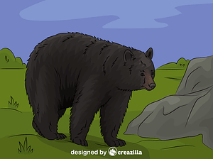 American black bear vector