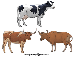 Set of Cattle vector