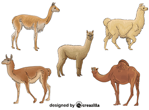 Set of Camelids vector