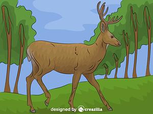 Mule Deer vector
