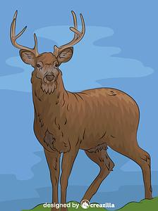 White Tail Deer vector
