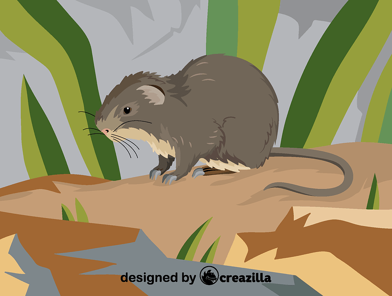 Greater cane rat vector