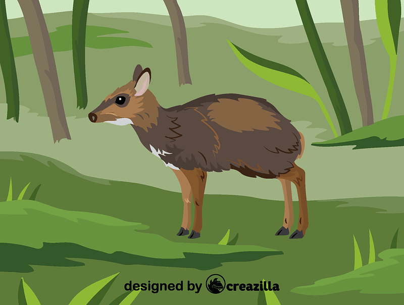 Philippine mouse-deer vector