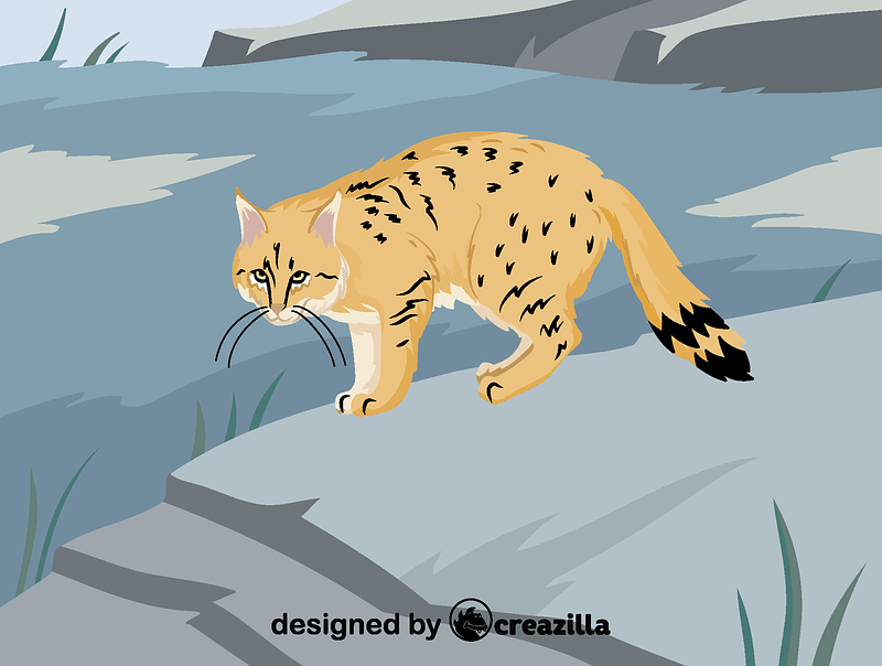 Chinese mountain cat vector