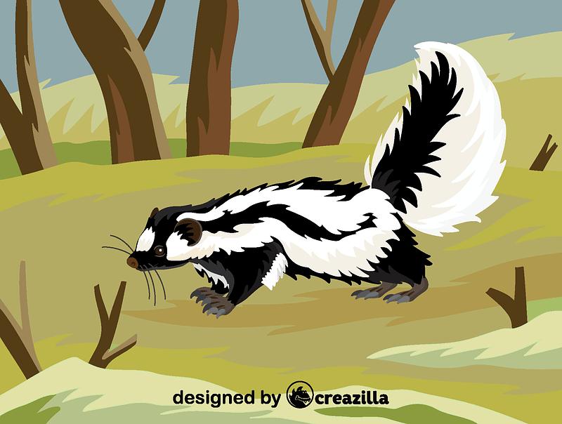 Striped polecat vector