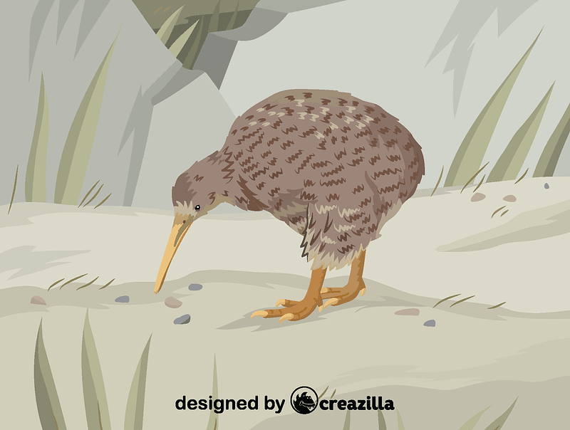 Great spotted kiwi vector
