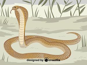 Immagine vettoriale di Philippine cobra