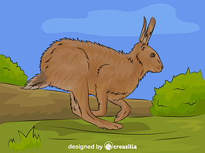 Brown Hare vector