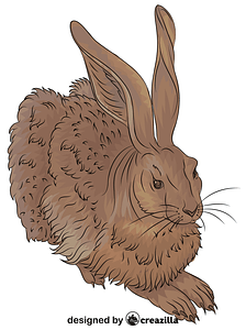 Durer Young Hare vector