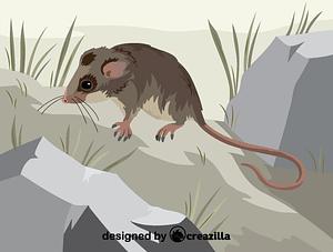 Immagine vettoriale di Mountain pygmy possum