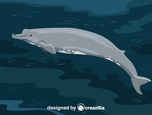 Immagine vettoriale di Baird's beaked whale