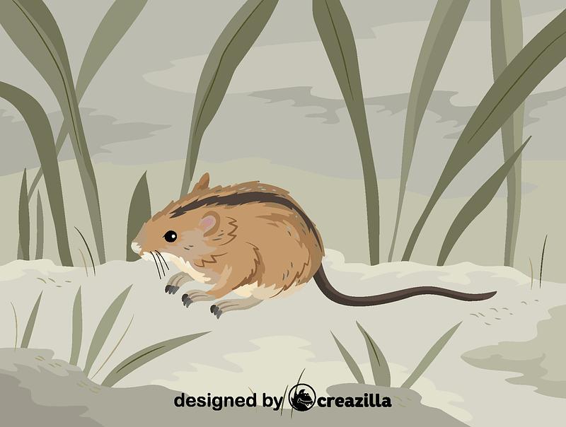 Striped field mouse矢量图像