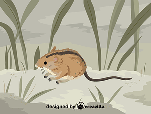 Immagine vettoriale di Striped field mouse