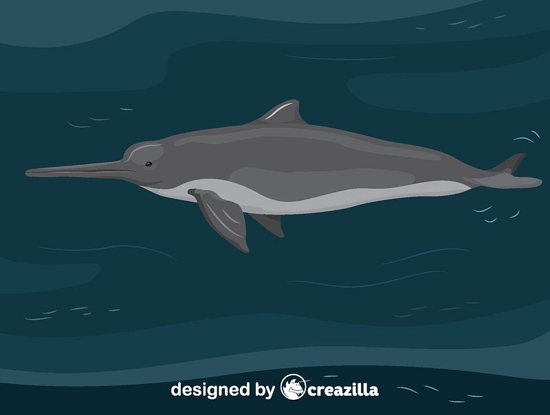 Vector de La Plata dolphin